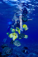 Woman snorkeling near reef fish at Hanauma bay, Oahu