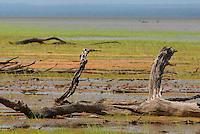 Na beira do rio Tapajós na floresta nacional do Tapajós no município de Belterra moradores chegam com toda família dos mais diversos cantos da reserva para tentar ver a baleia mink que desapareceu durante a madrugada.<br /> Foto Paulo Santos<br /> Belterra, Pará, Brasil<br /> 16/11/2007