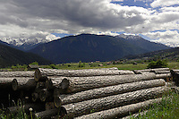 Logs in alpine meadows. Imst district, Tyrol, Alps, Austria.
