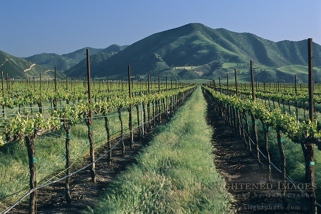 Vineyards in spring below the Sierra de Salinas, near Soledad, Monterey County, California