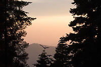 A warm glow fills the air during sunset at Sequoia Crest.