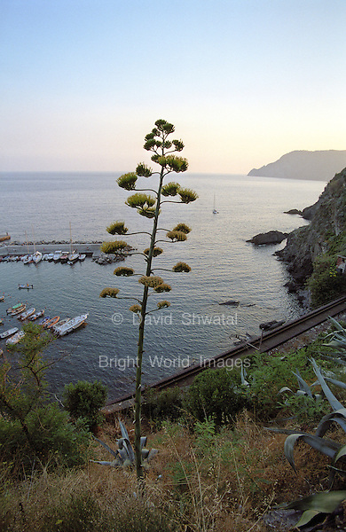 Evening along the Cinque Terre as seen from a hillside near Vernazza Italy.