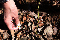 NWA Democrat-Gazette/FLIP PUTTHOFF <br /> Wildflowers are seen in March along the trail at Lake Wilson Park in Fayetteville.