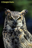 OW06-001z  Great horned owl - Bubo virginianus