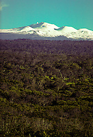 Snow capped Mauna Kea volcano and forest. Volcano National Park. Big Island.