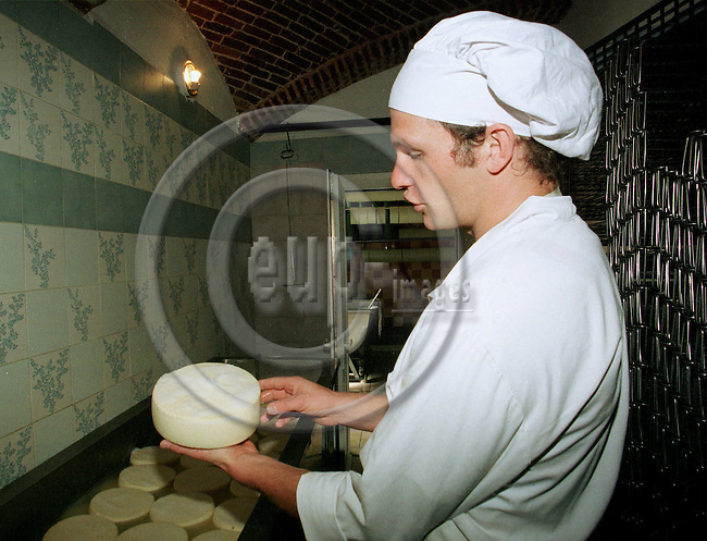 "SERANVILLERS - FRANCE - 01 MAY 1996 -- Cheese manufacturing on the SAUVAGE family estate in France. --  After pressing the ""Tome Cambray"" cheese Guillaume SAUVAGE soaks it in saturated salt water for 10-12 hours  before storage in 9¡ with an air humidity of 98%. -- PHOTO: JUHA ROININEN / EUP-IMAGES"
