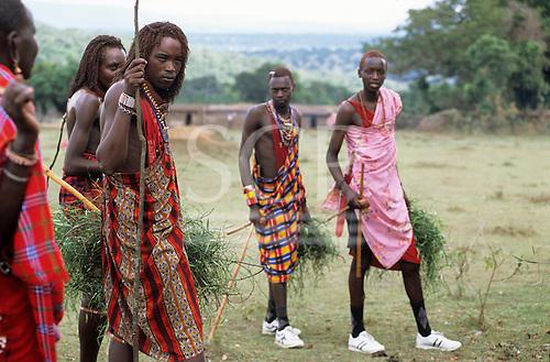 Lolgorian, Kenya. Siria Maasai; moran warriors bringing medicinal grasses for Eunoto coming of age ceremony.