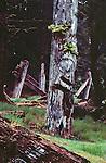Haida Gwaii, Haida  totem pole, longhouse, SGang Gwaay Ilnagaay, or Nan Sdins VIllage, or Ninstints Village, Gwaii Haanas National Park, Queen Charlotte Islands, British Columbia, Canada, North America, Most intact aboriginal long house on the Canadian west coast, Haida Gwaii is the new name for the Queen Charlotte Islands, Image taken in 1983.