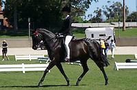 Rider 15-17