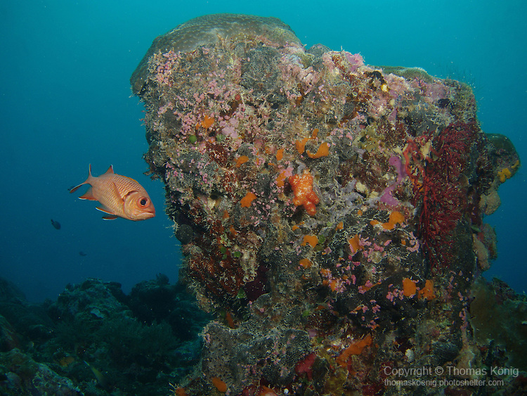 German Channel, Palau -- Lone Epaulette Soldierfish next to a rock.