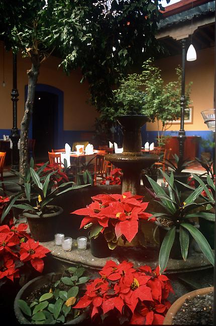 Poinsetta, Gazebo, Christmas Decorations, Oaxaca City, Oaxaca, Mexico