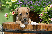 Bob, ANIMALS, REALISTISCHE TIERE, ANIMALES REALISTICOS, dogs, photos+++++,GBLA4346,#a#, EVERYDAY