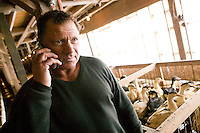 Izzy Yanay, founder and vice president of Hudson Valley Foie Gras, takes a phone call at the farm in Ferndale, USA, 16 March 2006.