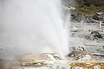 Prince of Wales Feather Geyser and Pohutu Geyser erupting, Whakarewarewa Geothermal Area, Rotorua, New Zealand