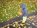 Toddler on wet fall afternoon collecting leaf..