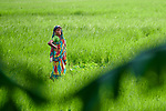 A woman stands in a rice field in Kunderpara, a village on an island in the Brahmaputra River in northern Bangladesh.