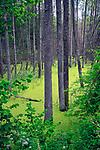 """Puszcza Romincka, budową przypomina lasy syberyjskiej tajgi, dlatego też jest zwana """"polską tajgą"""""""