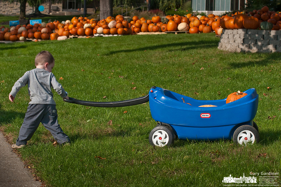 A 3-year-old pulls a wagon loaded with his choices after searching for the best pumpkins among the hundreds displayed for sale in the front yard of the Masonic Temple in Westerville, OH. The pumpkins are a fund raiser for Boy Scout Troop 560.