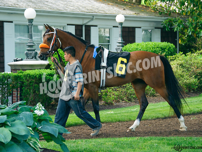 Tella Machine in the paddock at Delaware Park on 5/30/15