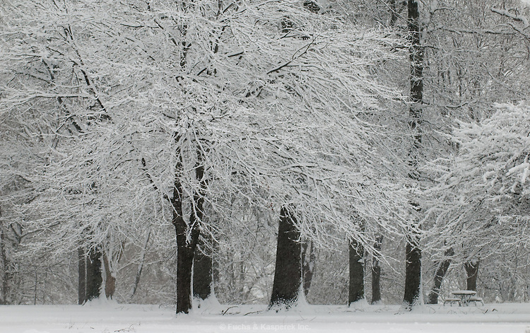 A fresh snow covers the trees at a local park.