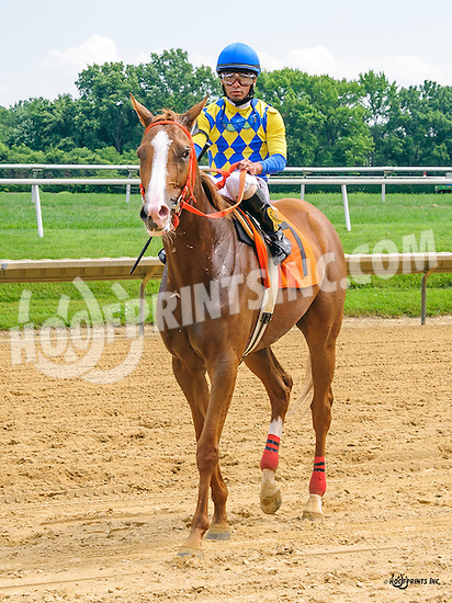 Starshiner winning at Delaware Park on 7/7/16