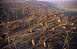 DEFORESTATION STORMS, France. Foret de la Crete, Haut Marne, Champagne Ardenne, France. Europe. Hurricane force winds uprooted millions of  trees across Europe. Dry weather followed  by heavy rain made the roots vulnerable.  Winds of 100-200kmh swept through the land  causing havoc. Hundreds of millions of trees were knocked down. Hundreds of millions of tons of wood  swamped timberyards.