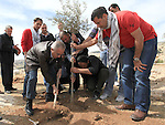 """Palestinian prime minister Salam Fayyad participates in a cultivation of olive trees on the occasion of """"Land Day"""", in the village of Bab al-Shams, northwest of Jerusalem, on March 30, 2013. Land Day marks the annual event that commemorates the deaths of six Arab Israeli protesters at the hands of Israeli forces during mass demonstrations in 1976 against plans to confiscate Arab land in northern Israel. Photo by Mustafa Abu Dayeh"""