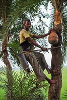Bangladesh, Jhenaidah. Man climbing a tree to collect date juice.