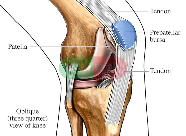 Bursa And Tendons Of The Knee Doctor Stock