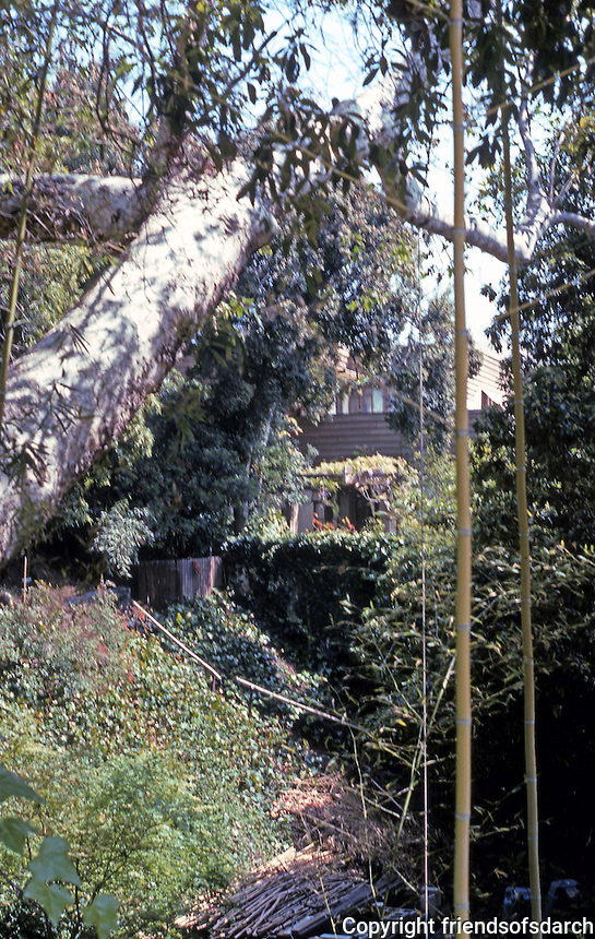 Lloyd Wright: Taggart House. On a small plot of Hillside land, a jungle.  Photo '91.