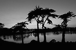 """Cypress Sunset""  Black and White Fine Art Landscape of Cypress trees in Harding Park Golf Course located in San Francisco California."