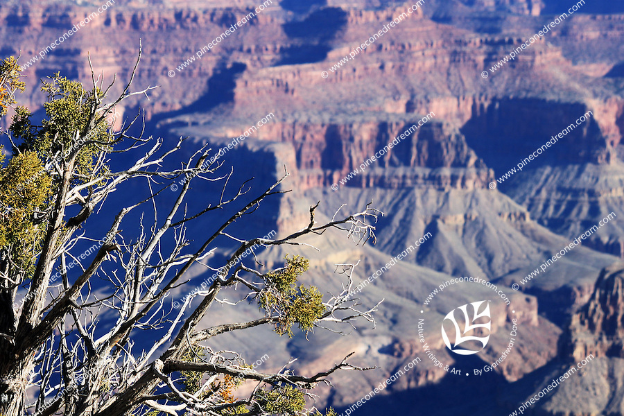 Dry branches of a tree stands in front of a view of rock formations at Grand Canyon in background, Arizona from the Grand View Point, in South rim.