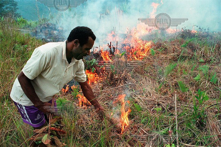 West-Papua / Ilugua, March 2000 - Farmer Tugibaga Togotli of Ilugua in a side valley of the Great Baliem Valley burning a field which he hasn't used for a couple of years (6-7 years, he doesn't know how long exactly) to prepare it for a crop of sweet potatoes. The farmers of the central highlands pratice rotation farming..© Rob Huibers
