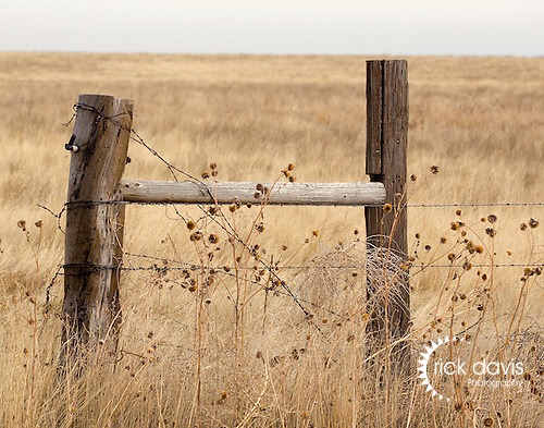Endless miles of barbed wire fence tamed the great American west in the late 1800's. This fence stretches through the Pawnee National Grasslands in northeastern Colorado.