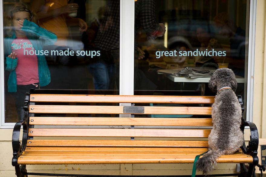 Liza, Annie Hubben's dog, barks loudly outside while scratching on the window at her owner eating breakfast inside. Standing by Lindsay Jackson watches the dog as it's behavior continues and customers are attracted to the scene.