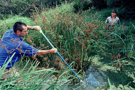 Envir. Officer Craig Murrell (L)and Dr Graham Pyke (R) searching for Green Golden Bell Frogs at Long Reef Golf Course pond, Collaroy, New South Wales.