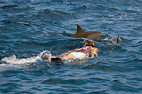 female snorkeler with spinner dolphins, Stenella longirostris, Big Island, Hawaii, Pacific Ocean