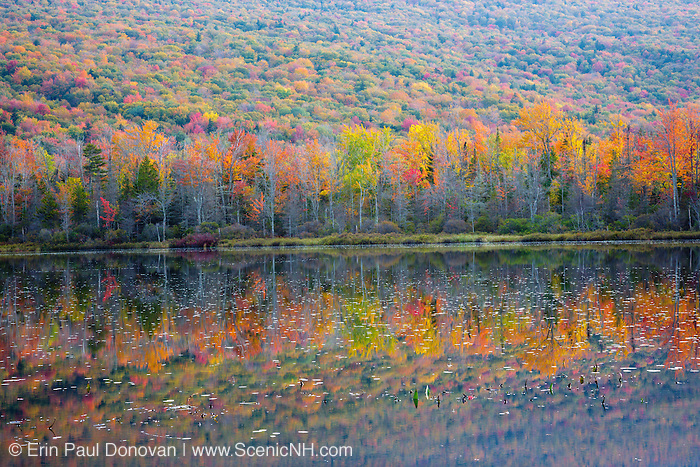 Elbow Pond during the autumn months in Woodstock, New Hampshire. Species of fish in this pond include chain pickerel, yellow perch and smallmouth bass. This area was part of the Gordon Pond Railroad, which was a logging railroad in operation from 1905-1916.