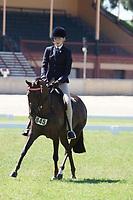 Child's Large Pony