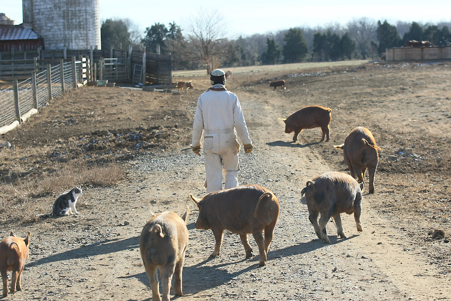Life on the farm at the Gryffons Aerie farm in Gordonsville, Va.  Credit Image: © Andrew Shurtleff