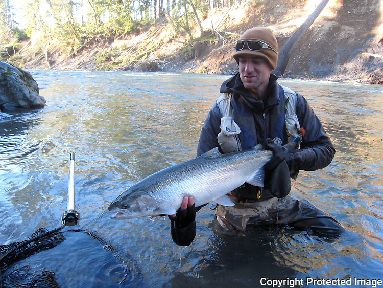 A fisherman holds a steelhead from Washington's Sol Duc river.