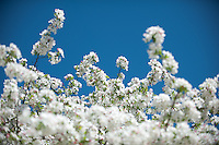 120326_First_Days_of_Spring