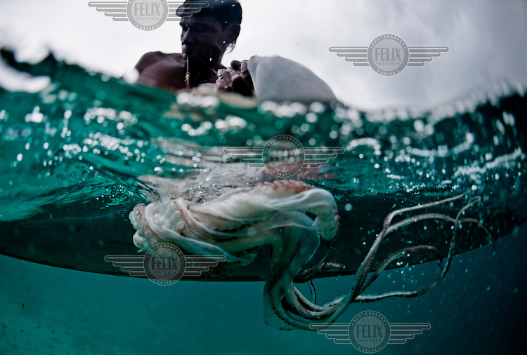 A Bajau fisherman swims to the surface with an octopus caught in the Banda Sea. The Bajau (Bajo) Laut are an ethnic group of Malay origin, they have for centuries lived out their lives almost entirely at sea, plying a tract of ocean between Malaysia, the Philippines and Indonesia.