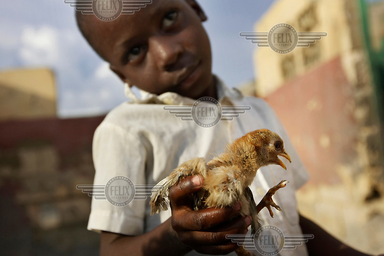 A boy holds a baby chicken.