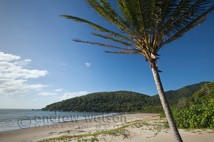 Windswept cocunt palm at Cherry Tree Bay.  Cooktown, Queensland, Australia