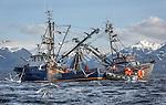2013 Sitka Sac Roe Herring Fishery Portfolio
