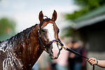 LOUISVILLE, KENTUCKY - MAY 02: Instagrand at Churchill Downs in Louisville, Kentucky on May 01, 2019. Evers/Eclipse Sportswire/CSM