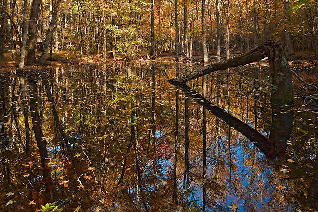 Autumn color on Gum Swamp, Cades Cove