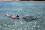 To see a green turtle from up close is absolutely impressive.<br /> Le face &agrave; face avec cet animal marin present depuis plus de 100 millions d annees dans l'ocean est impressionnant