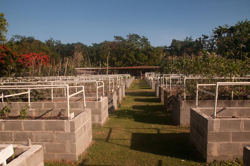Organic Garden, Turtle Island, Yasawa Islands, Fiji